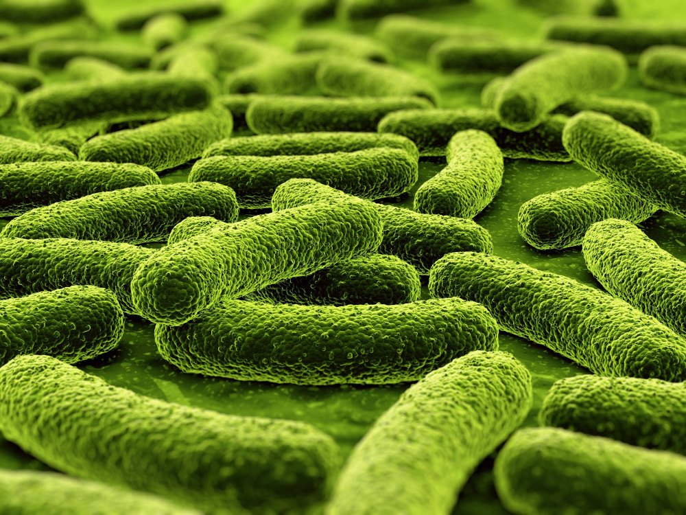 MDR-mycobaterium-tuberculosis